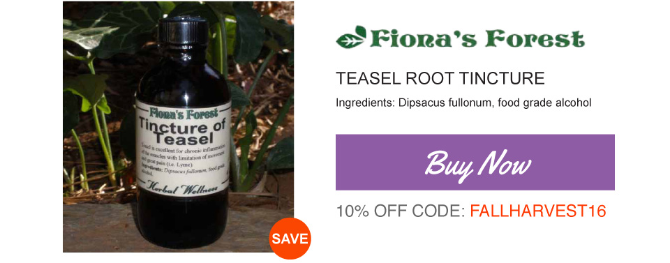 Buy Teasel Root